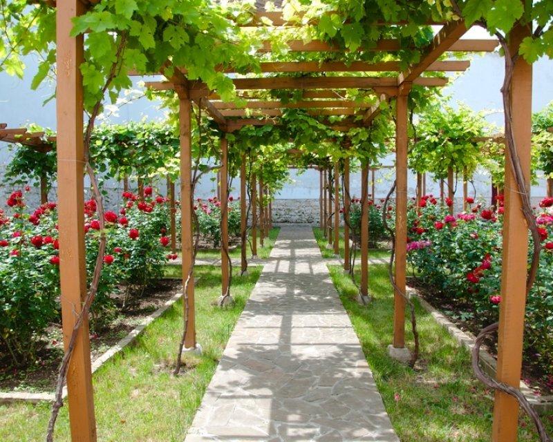 Ландшафтный дизайн из винограда